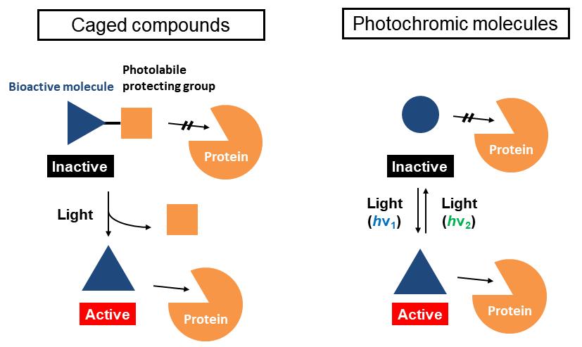 Photopharmacology