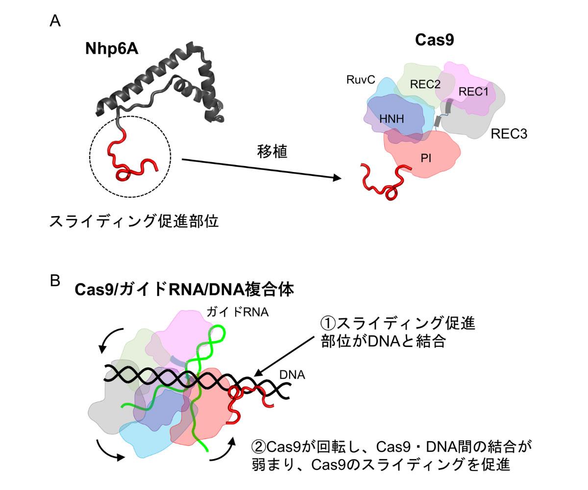 20210719_press_release_kamagata